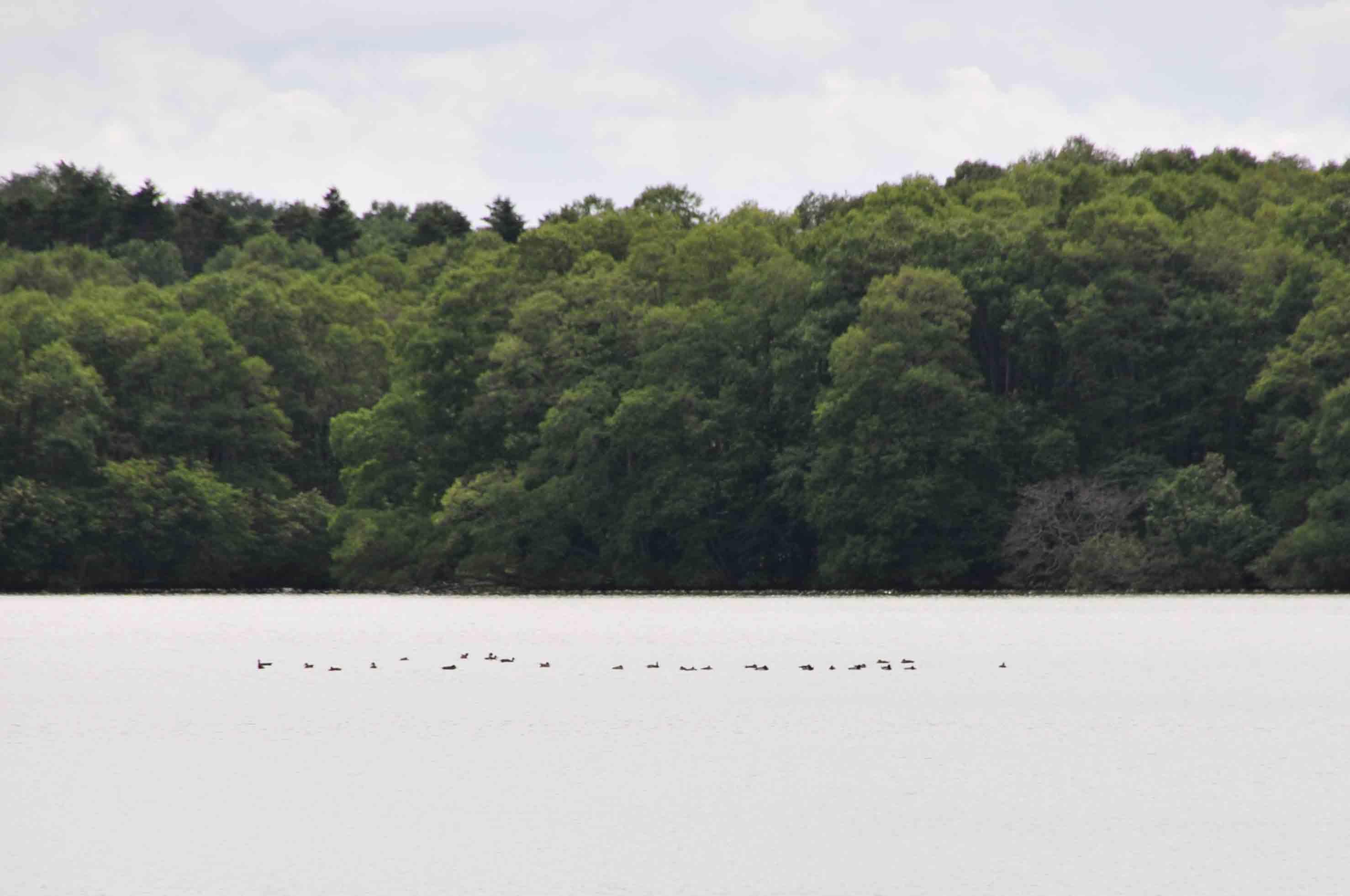 リヤウシ湖3