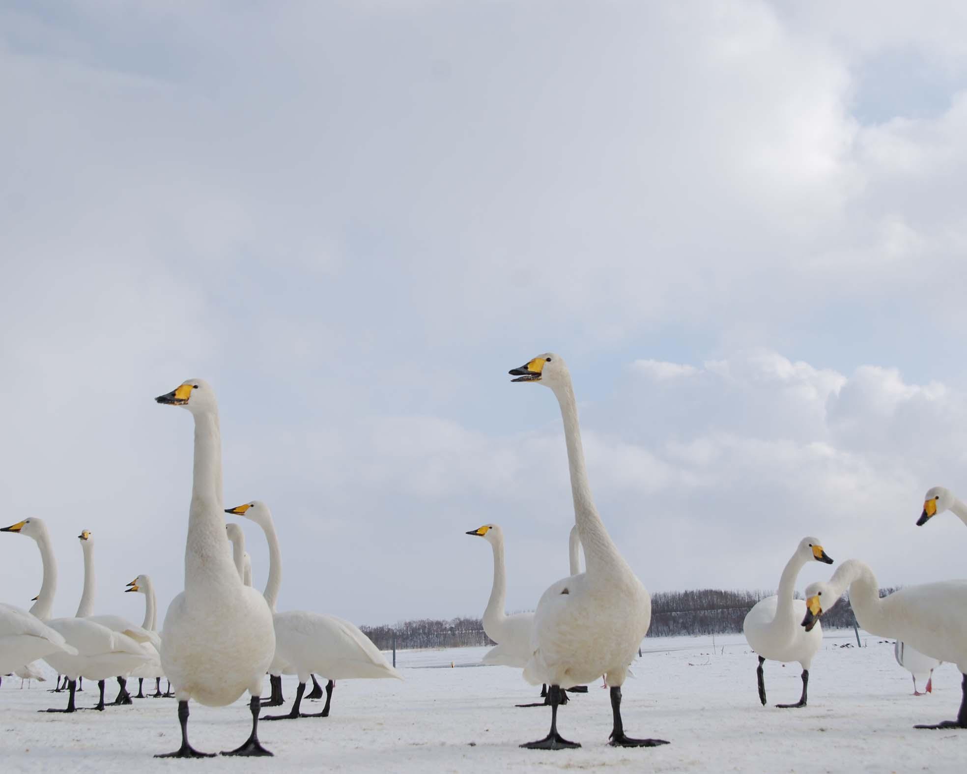 白鳥公園3